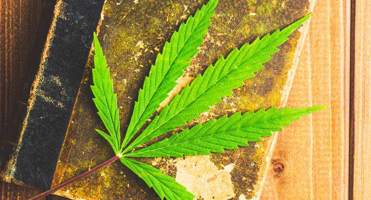 Dr. Poli, prefazione del nuovo libro sulla Cannabis